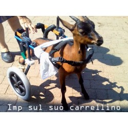 Carrellino a due ruote Doggy